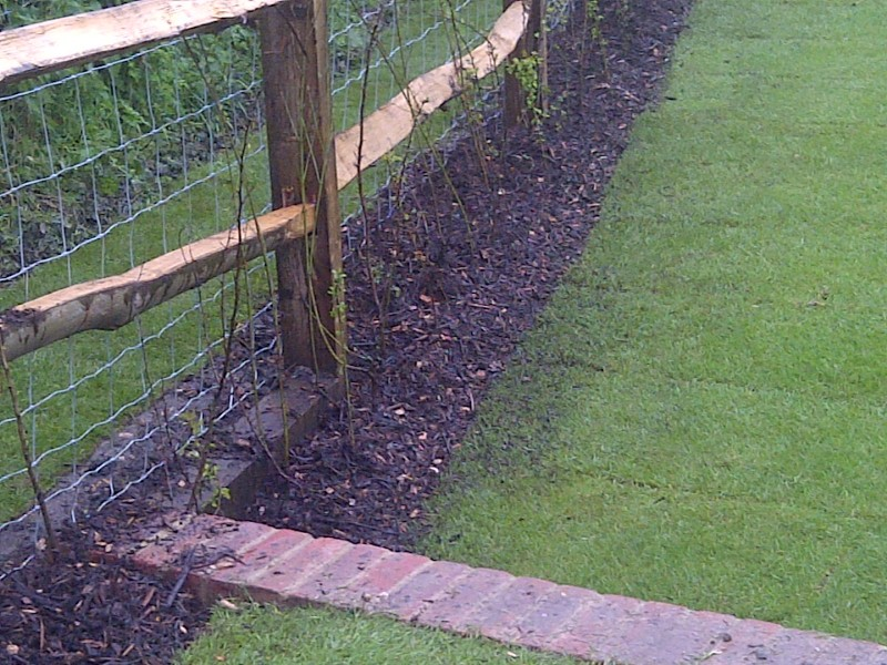 post and rail fencing planted